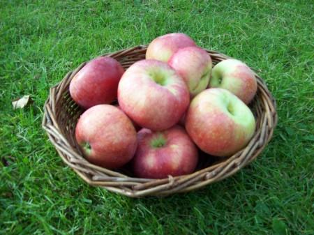 Kontroversiella äpplen. Bild: wikipedia.
